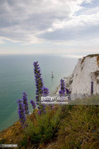 Seven sisters cliffs on May 25 2019 in Seaford England