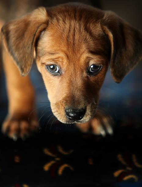Warrington Dog Rescue