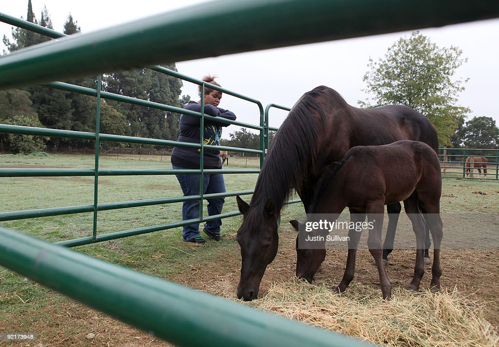 Seventeen year-old Marissa Hamilton watches a horse and her newborn eat oats at Wellspring Academy October 20, 2009 in Reedley, California. Struggling with her weight, seventeen year-old Marissa Hamilton enrolled at the Wellspring Academy, a special school that helps teens and college level students lose weight along with academic courses. When Marissa first started her semester at Wellspring she weighed in at 340 pounds and has since dropped over 40 pounds of weight in the first two months of the program. According to the Centers for Disease Control and Prevention, 16 percent of children in the US ages 6-19 years are overweight or obese, three times the amount since 1980.