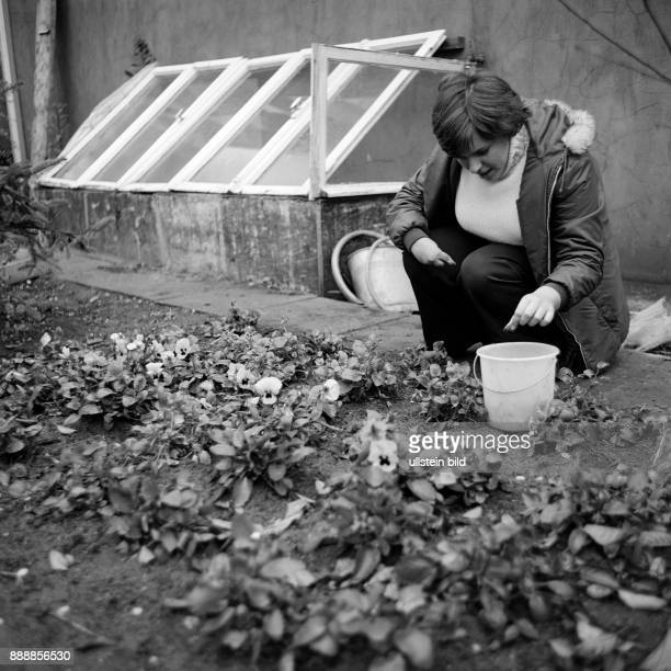 Seventies black and white photo people physical handicap school school lessons gardening schoolgirl 13 to 15 years working in a flowerbed Special...