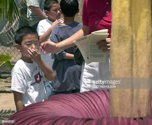 Sevenyearold Andrew Kong holds his nose as he stands before the world's largest flower 14 June 2000 at the Fullerton Arboretum CA The Indonesian...
