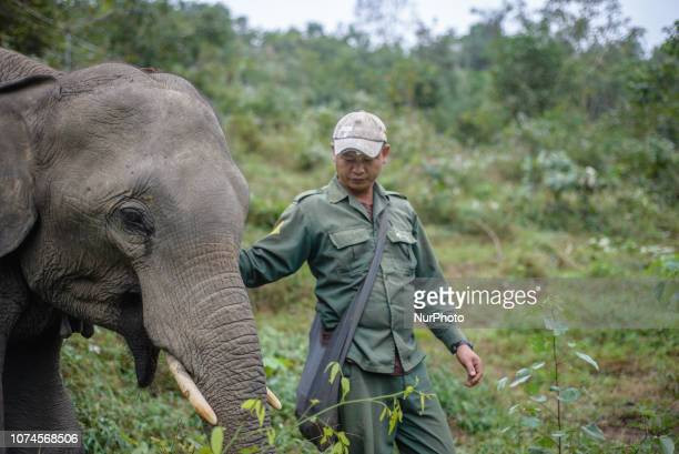 Sevenyearold elephant with the mahout in the Elephant Conservation Center Sayaboury Laos in December 2018 Laos was known as The land of a million...