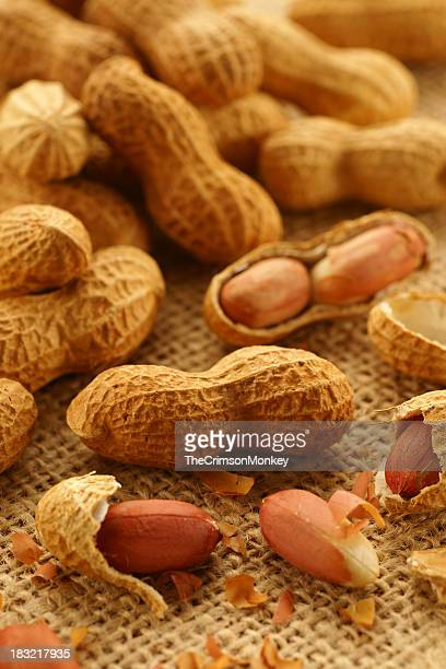 Several freshly roasted peanuts