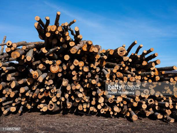 Several hardwood logs lie waiting to be cut into lengths of firewood on property owned by firewood supplier Robert Marble in Charlotte Vermont on...