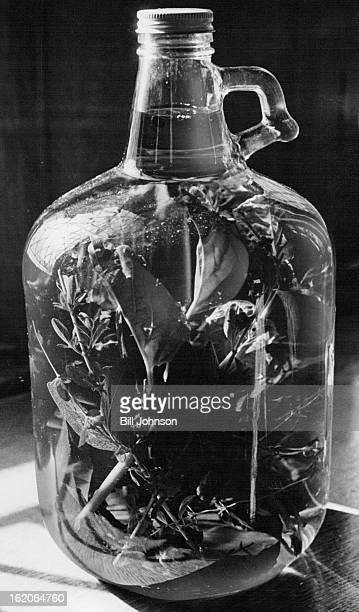 DEC 3 1965 DEC 9 1965 DEC 12 1965 Several herbs grown at gardens give vinegar special flavor scent