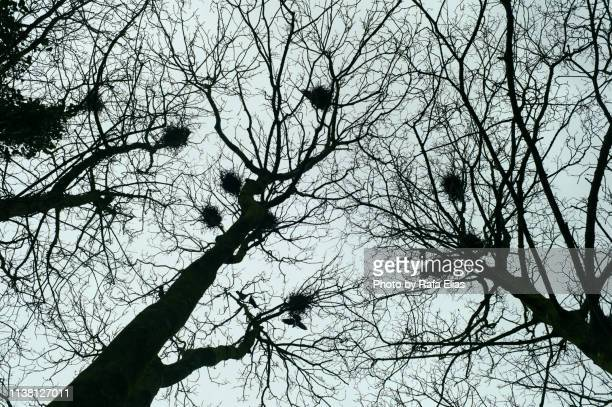 several nests on trees - capillary body part stock photos and pictures