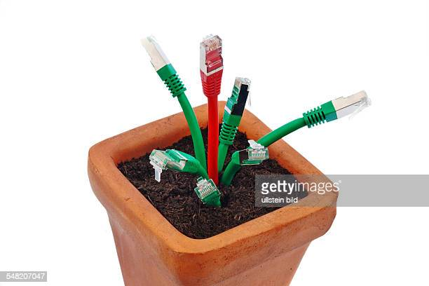 several network cables in a flower pot