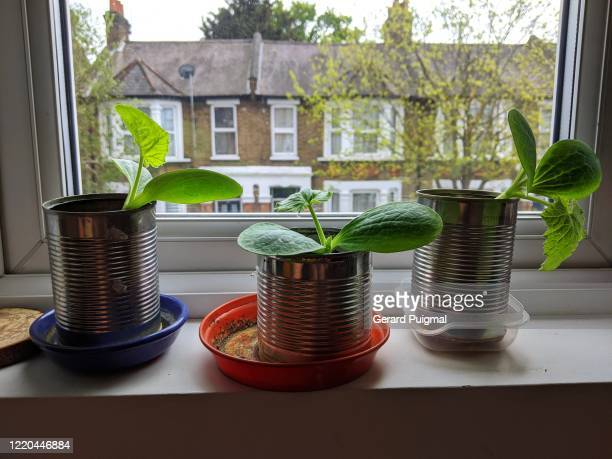 several plant pots with seedlings inside a house - growth stock pictures, royalty-free photos & images