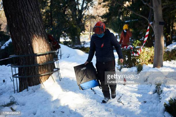 Several workers are working on cutting down the trees in the Royal Botanical Garden which have been damaged by the heavy snowfall caused by by the...