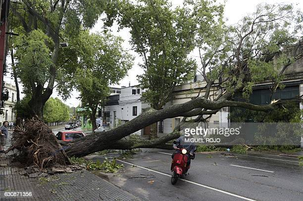 TOPSHOT A severe thunderstorm with winds of more than 100 km an hour wreaked havoc in Montevideo on January 3 knocking down trees and damaging homes...