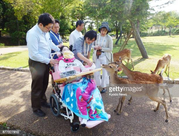 Severely disabled 26yearold Misato Komiyama from Maibara in Shiga Prefecture and her parents feed rice crackers to deer at western Japan's Nara Park...