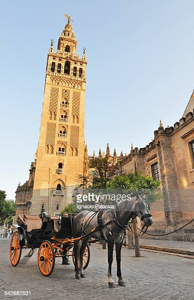 sevilla´s giralda, horse and cart - la giralda fotografías e imágenes de stock