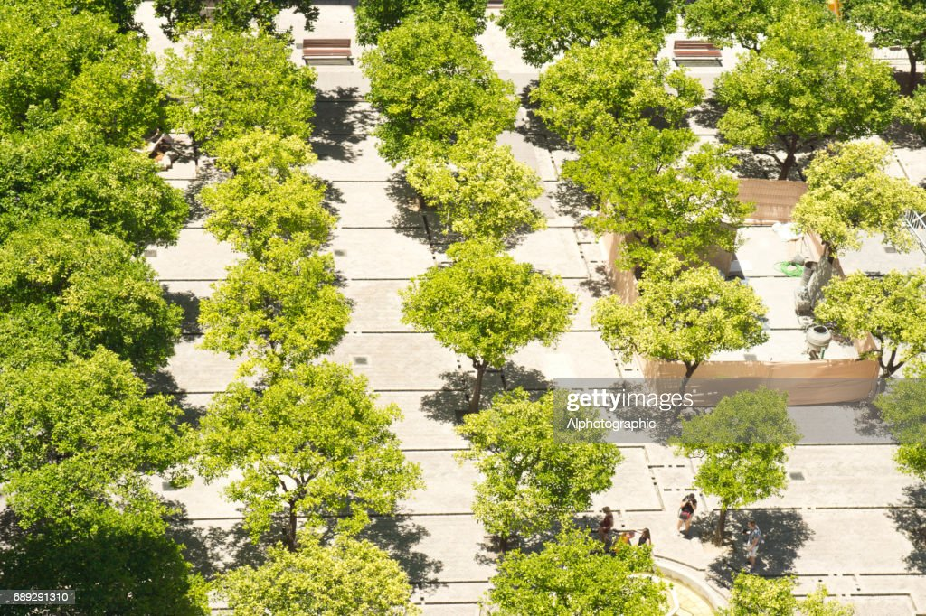 Seville Cathedral gardens from the Cathedral Tower. : Stock Photo