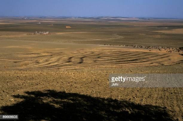 Seville Cereals plain near Carmona