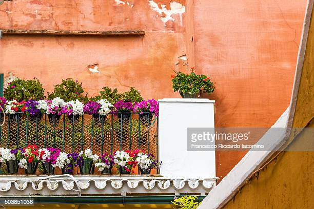 Seville, colors and flowers