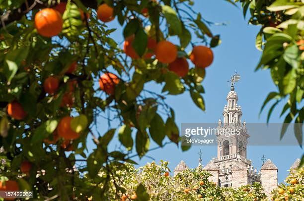 seville oranges framing la giralda - seville stock pictures, royalty-free photos & images