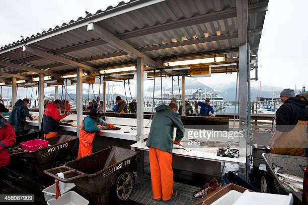 seward...alaska usa..fishermen cleaning daily catch - barrow alaska stock pictures, royalty-free photos & images