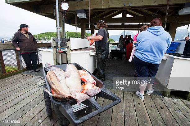 Seward...Alaska USA..Fishermen cleaning daily catch