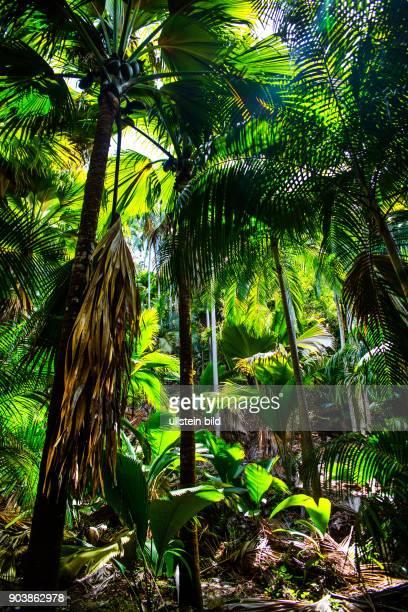 Seychellen Seychelles SYC Praslin Suedostkueste Inselstaat Africa Afrika Suedliches Afrika Westkueste Afrasia Indischer Ozean Maskarenruecken...