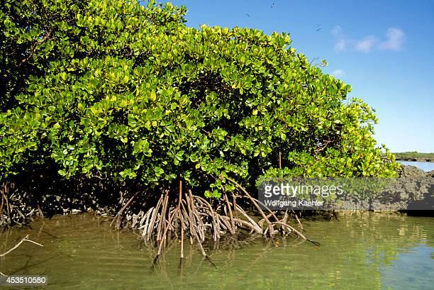 Seychelles, Aldabra Island, Mangroves.