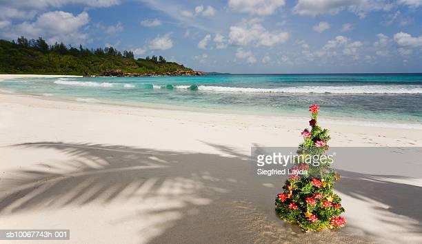 Seychelles, Anse Severe, La Digue Island, Christmas tree on beach