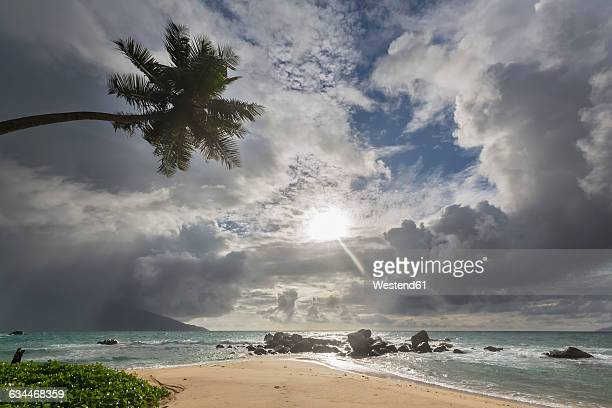 seychelles, indian ocean, mahe island, glacis beach, palm and granite rocks on beach - coco de mer stock pictures, royalty-free photos & images