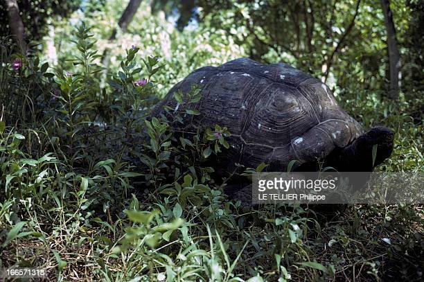Seychelles Islands En 1972 aux îles Seychelles une tortue terrestre géante dans la végétation