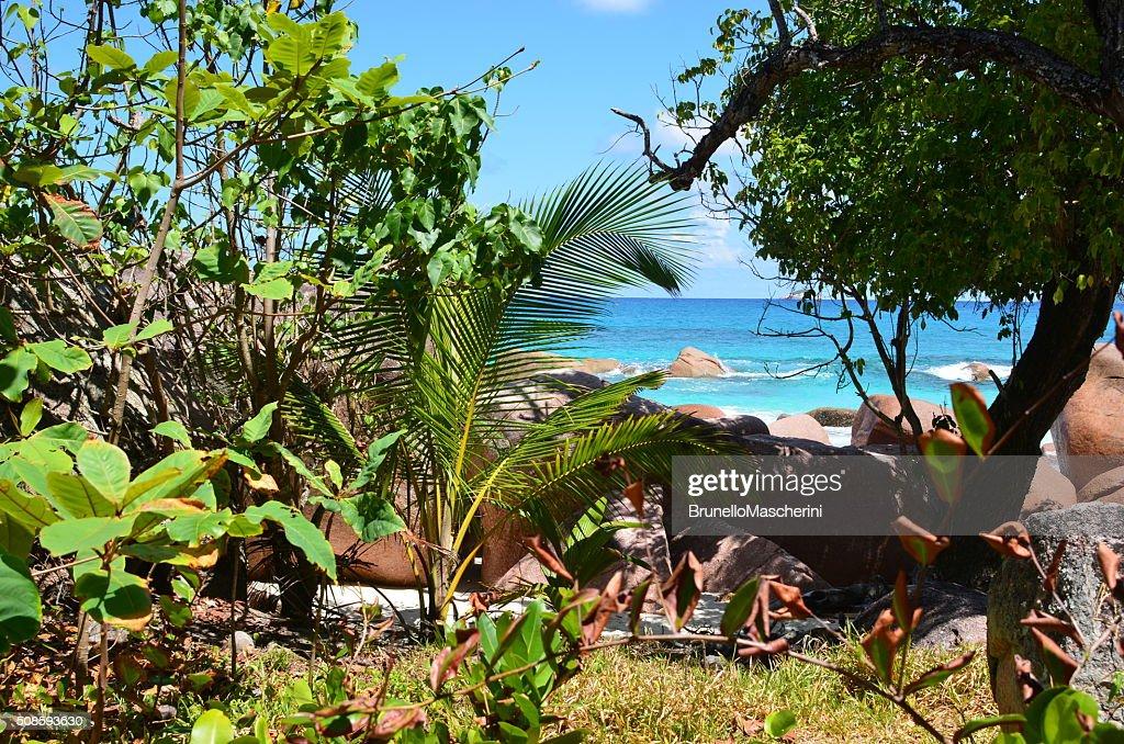 Seychelles islands.Praslin : Stock Photo