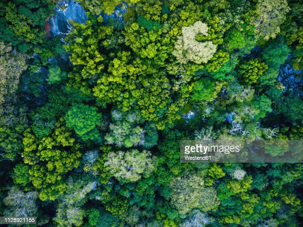 seychelles, la digue, aerial view of rain forest - 生い茂る ストックフォトと画像