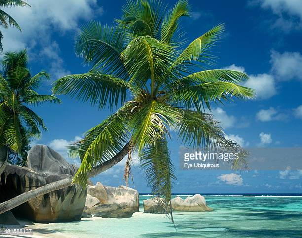 Seychelles La Digue Reunion Beach Large boulders at waters edge with a coconut palm tree leaning across the turquoise water