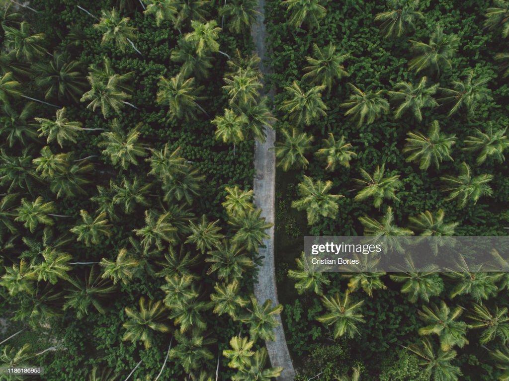Seychelles : Stock Photo