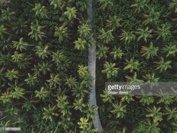 seychelles - bortes stock photos and pictures