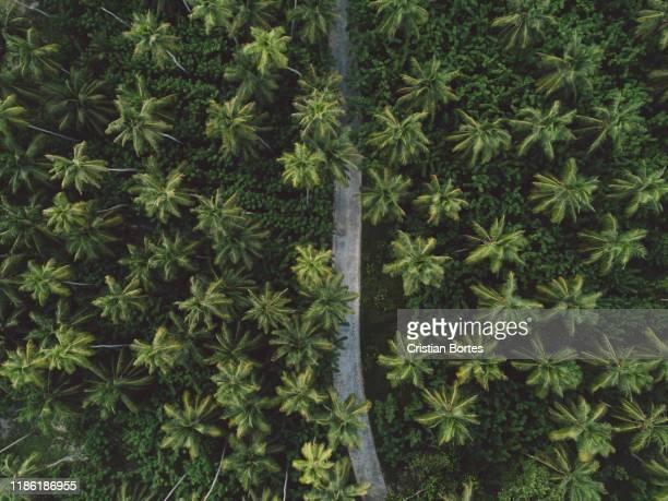 seychelles - bortes stockfoto's en -beelden