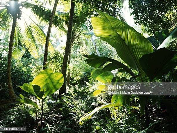 seychelles, rainforest - lush stock pictures, royalty-free photos & images