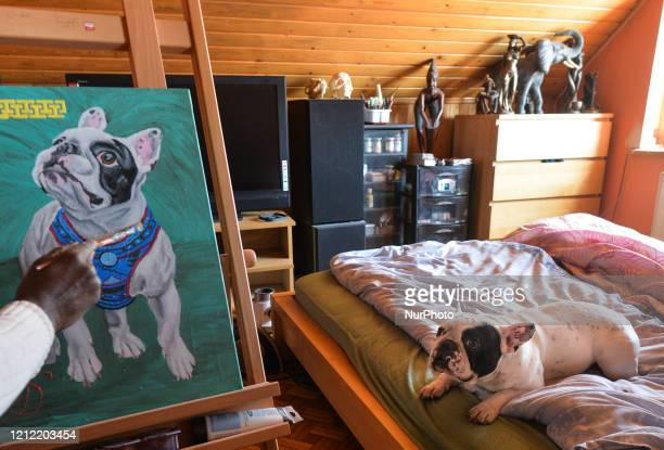 Seydou Zan Diarra a Maliborn veterinarian surgeon who lives in Krakow for over 30 years seen inside his room cum art studio painting a French Bulldog...
