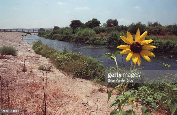 SFRiver3bv8–14/ENCINO –– The Los Angeles River as it winds through the Sepulveda Basin While the river often not more than a concrete encased flood...