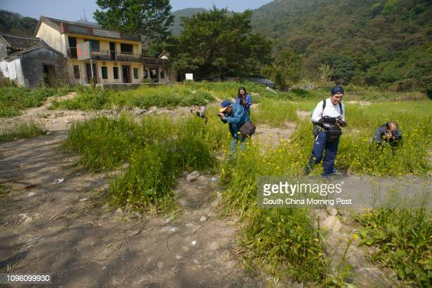 Sha Lo Tung Cheung Uk village Day trippers admire and photograph the Rapeseed flowers growing in front of a two story house at Sha Lo Tung Cheung Uk...