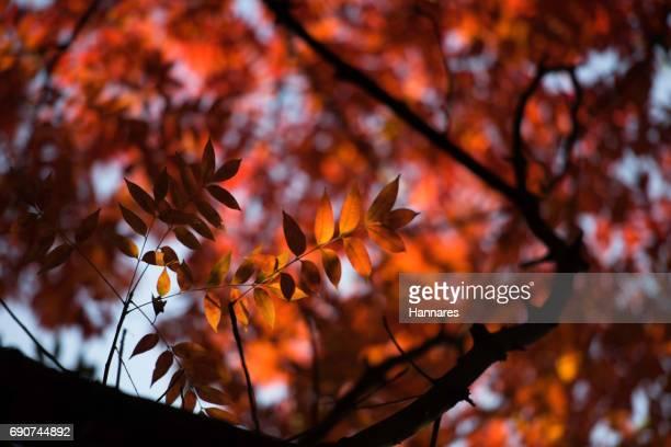 shade leaf - estampa de folha - fotografias e filmes do acervo