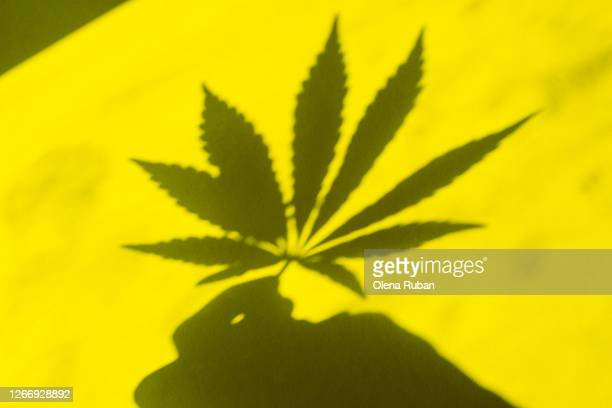shadow from a leaf of marijuana in a hand - marijuana leaf stock pictures, royalty-free photos & images