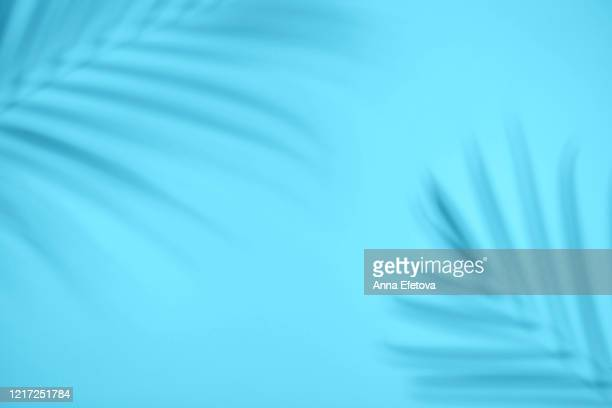 shadow from tropical leaf - palm tree stock pictures, royalty-free photos & images