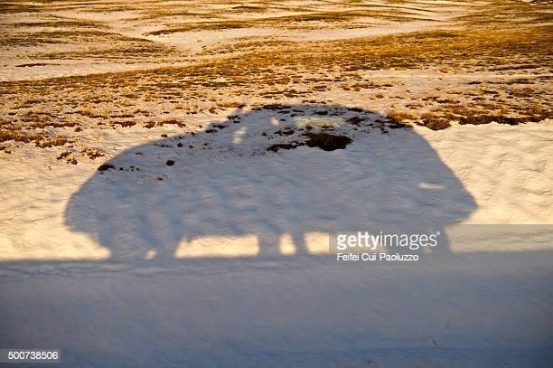 Shadow of a car on road at Jökulsarlon Iceland