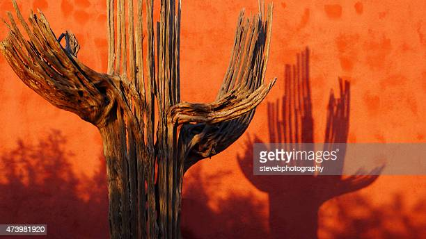 shadow of a dead saguaro cactus - stevebphotography stock pictures, royalty-free photos & images