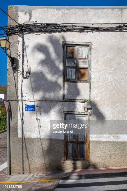 shadow of a palm tree - atlantic islands stock pictures, royalty-free photos & images