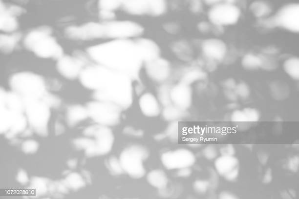 Shadow of a tree on a white background. Black and white image.