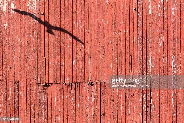 Shadow Of Flying Seagull On Barn