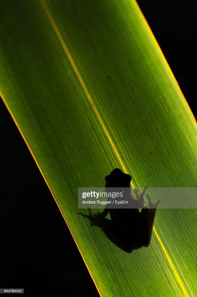 Shadow Of Frog On Grass Against Black Background : Stock Photo