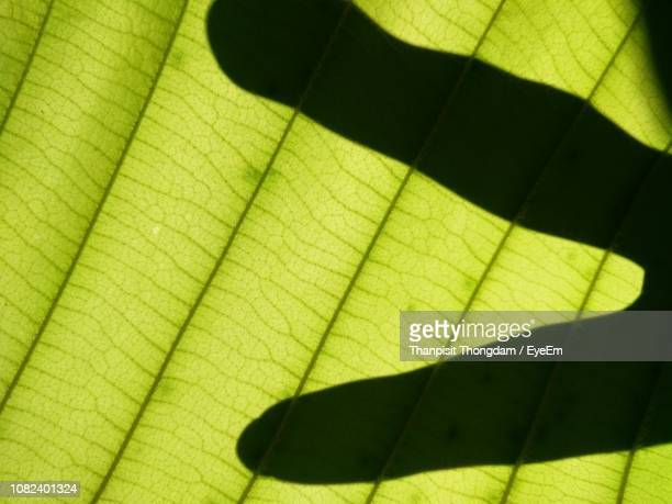 Shadow Of Human Finger On Leaf