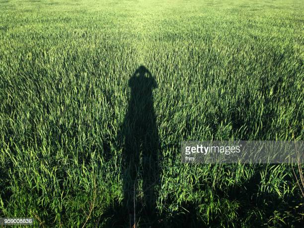 Shadow of one person in a green wheat field