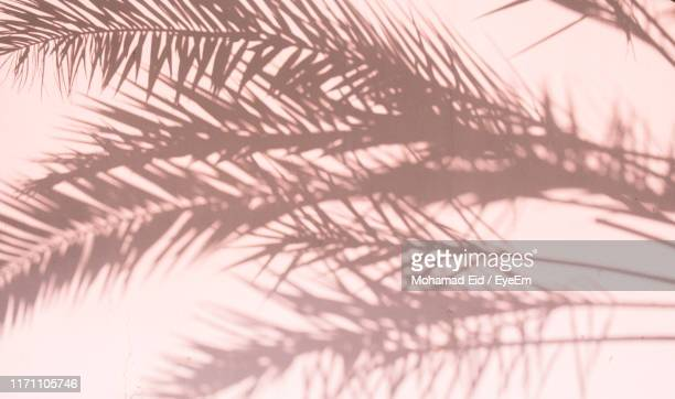 shadow of palm leaves on wall - schaduw stockfoto's en -beelden