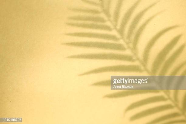 shadow of palm leaves on yellow background - palm tree stock pictures, royalty-free photos & images